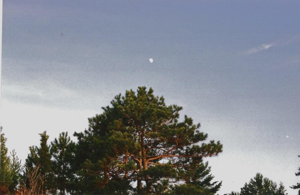pinery